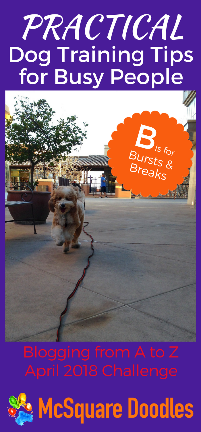 #AtoZChallenge - B  is for Breaks and Bursts - Practical Dog Training Tips for Busy People on McSquare Doodles