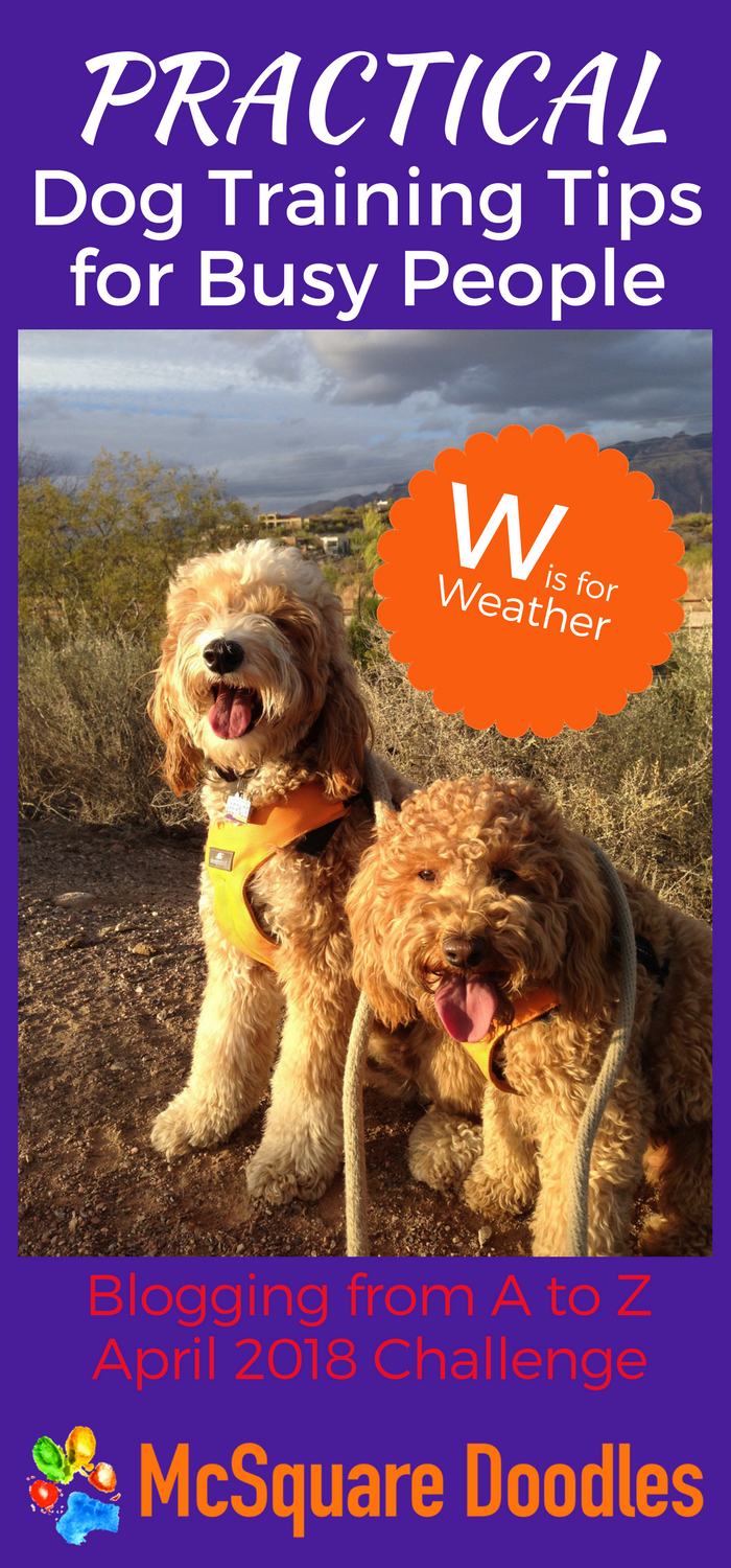 #AtoZChallenge - W is for Weather - Practical Dog Training Tips for Busy People on McSquare Doodles