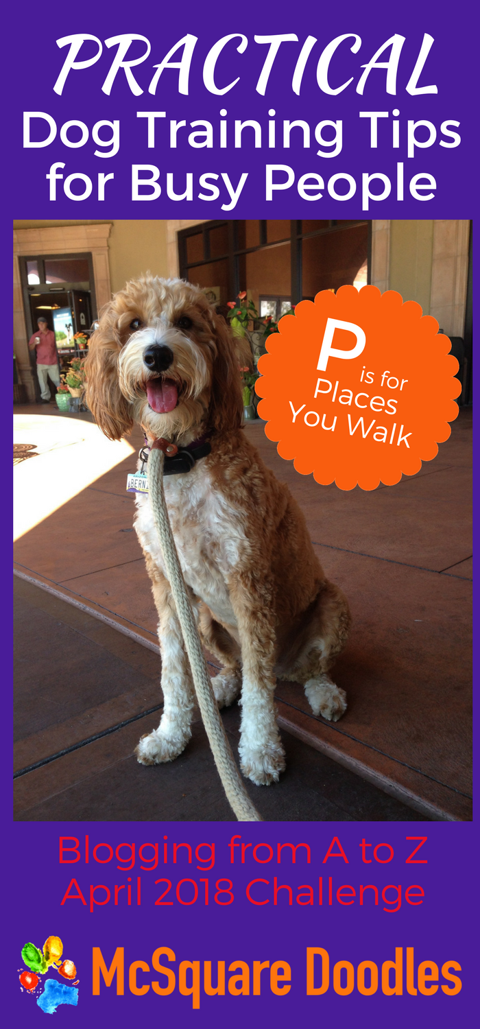 Practical Dog Training Tips for Busy People - P is for Places You Walk. If your dog gets a daily walk, then trying new routes will help you find the time to challenge your dog every day. Even if your training lasts for just a few minutes! Read more at McSquare Doodles! #McSquareDoodles #dogtraining #dogtrainingtips #therapydogtraining