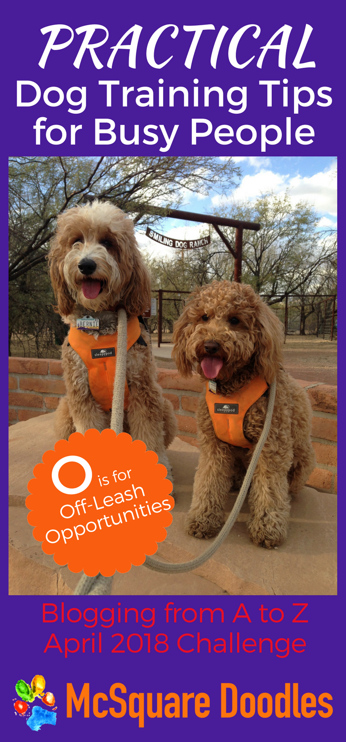 #AtoZChallenge - O is for Off-Leash Opportunities - Practical Dog Training Tips for Busy People on McSquare Doodles