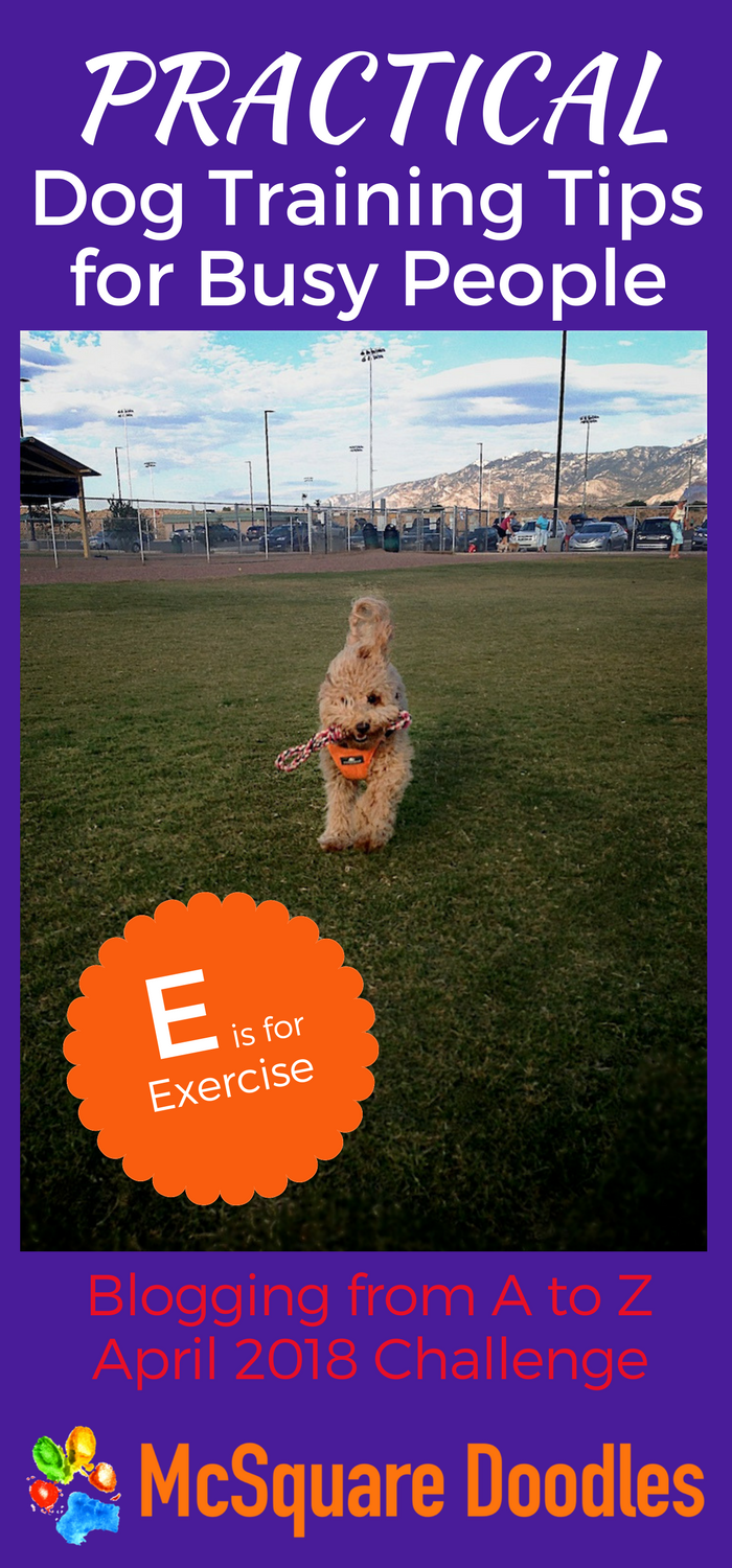 #AtoZChallenge - E is for Exercise - Practical Dog Training Tips for Busy People on McSquare Doodles