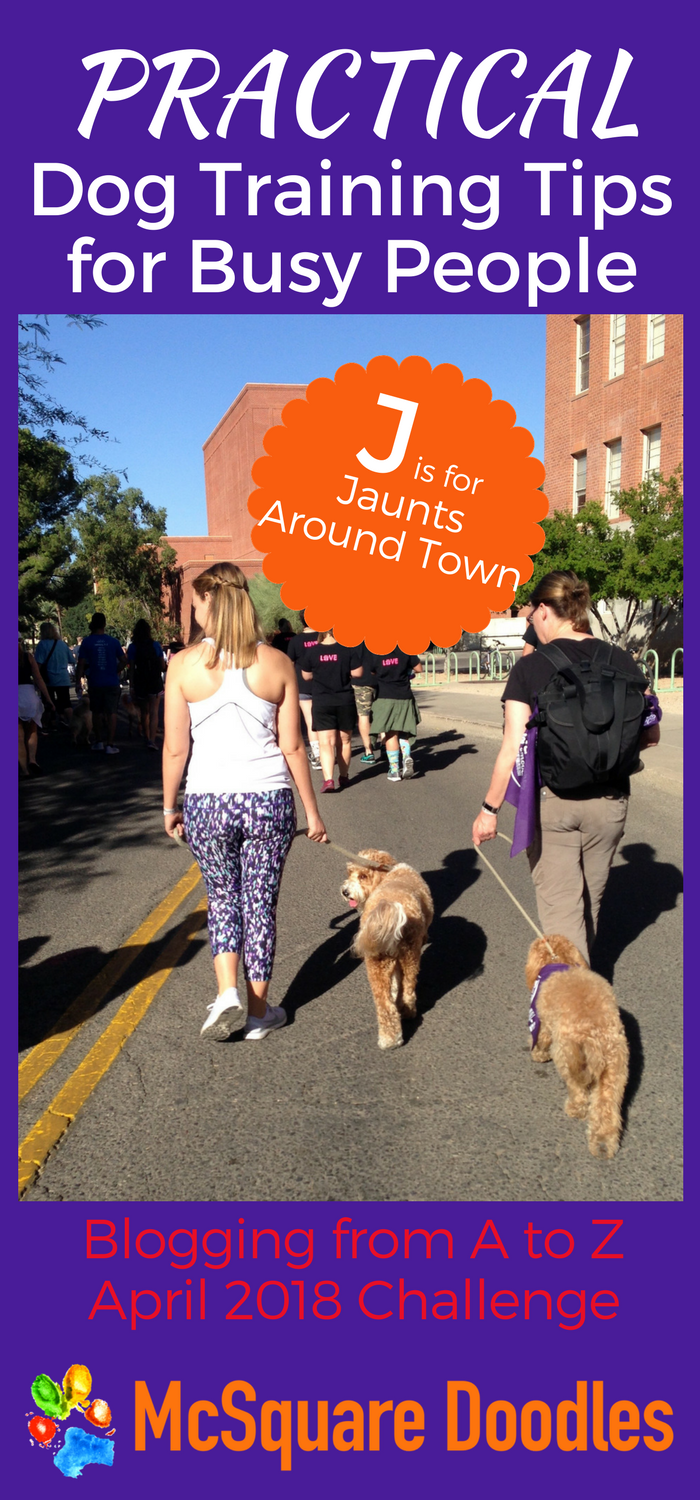 #AtoZChallenge - J is for Jaunts Around Town - Practical Dog Training Tips for Busy People on McSquare Doodles