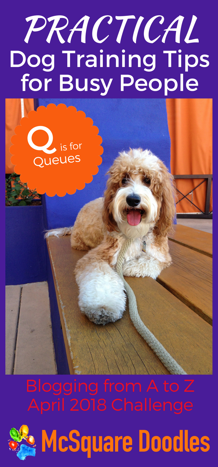 #AtoZChallenge - Q is for Queues - Practical Dog Training Tips for Busy People on McSquare Doodles