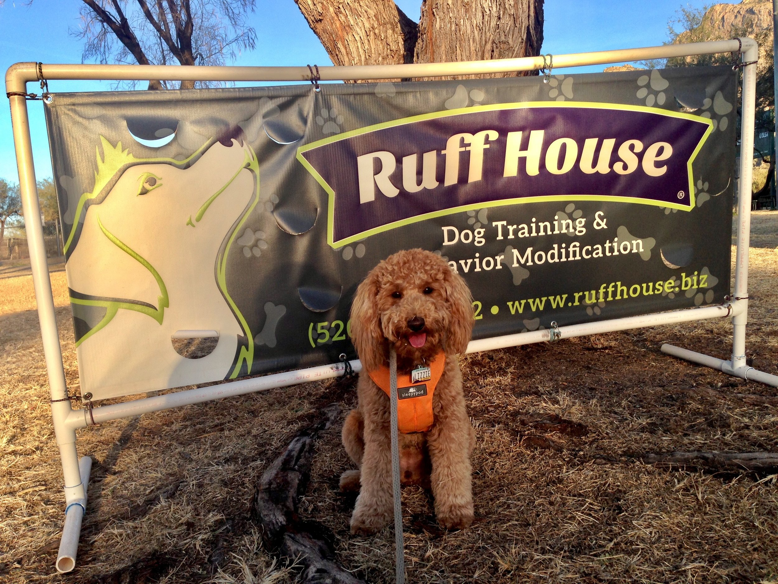 Lizzie McSquare holds a sit-stay in front of the Ruff House Dog Training & Behavior Modification sign at the end of Dog Obedience Park Class.