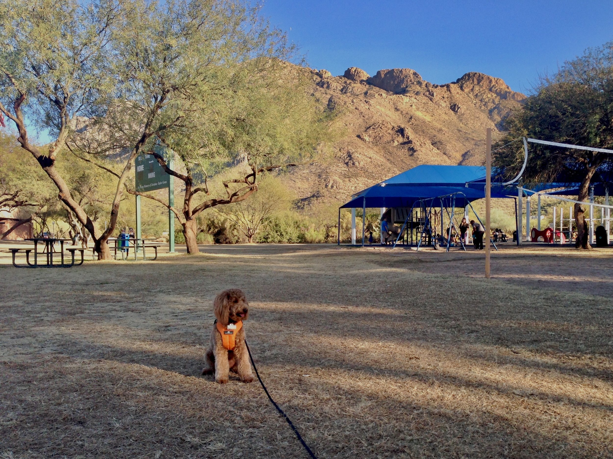 Lizzie McSquare holds a sit-stay on the long lead in front of the Santa Catalina Mountains during Dog Obedience Park Class in Tucson Arizona.