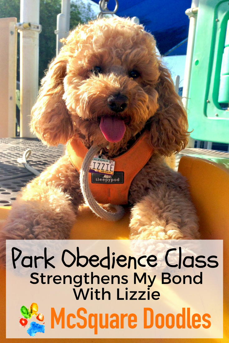 Working on basic obedience skills with increased distance, duration, and distractions is always engaging with the variety of activities provided during Park Obedience Class