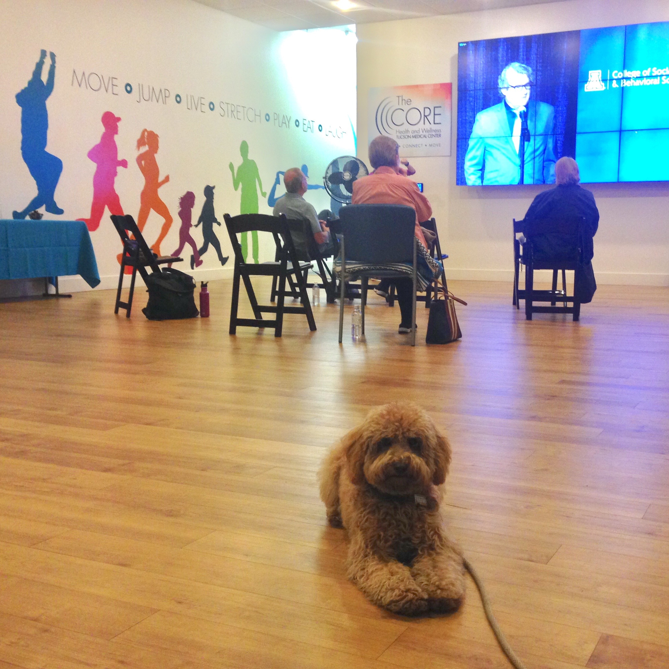 Lizzie McSquare remains in her down-stay at The Core at La Encantada, a dog-friendly space that offers free lectures and simulcasts on a variety of topics.