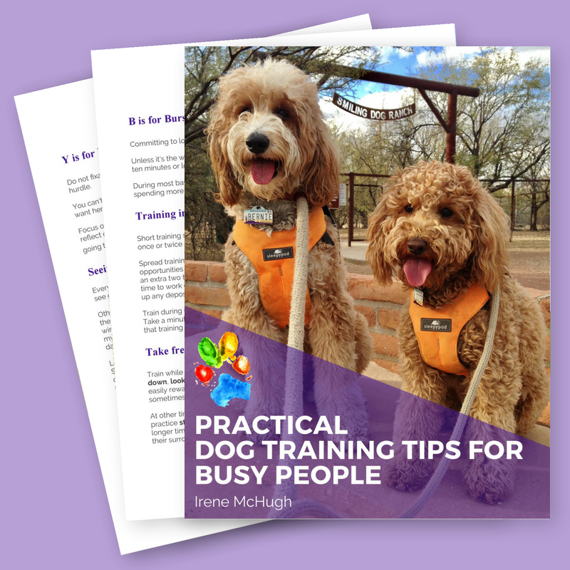 Book cover for Practical Dog Training Tips for Busy People by Irene McHugh