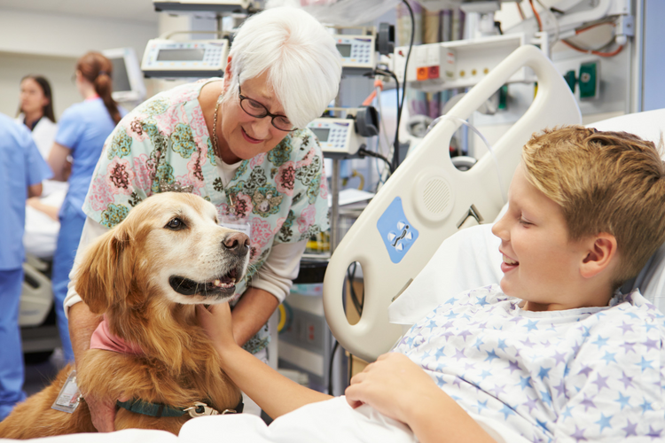 Stock photo of therapy dog Golden Retriever visiting child in hospital.