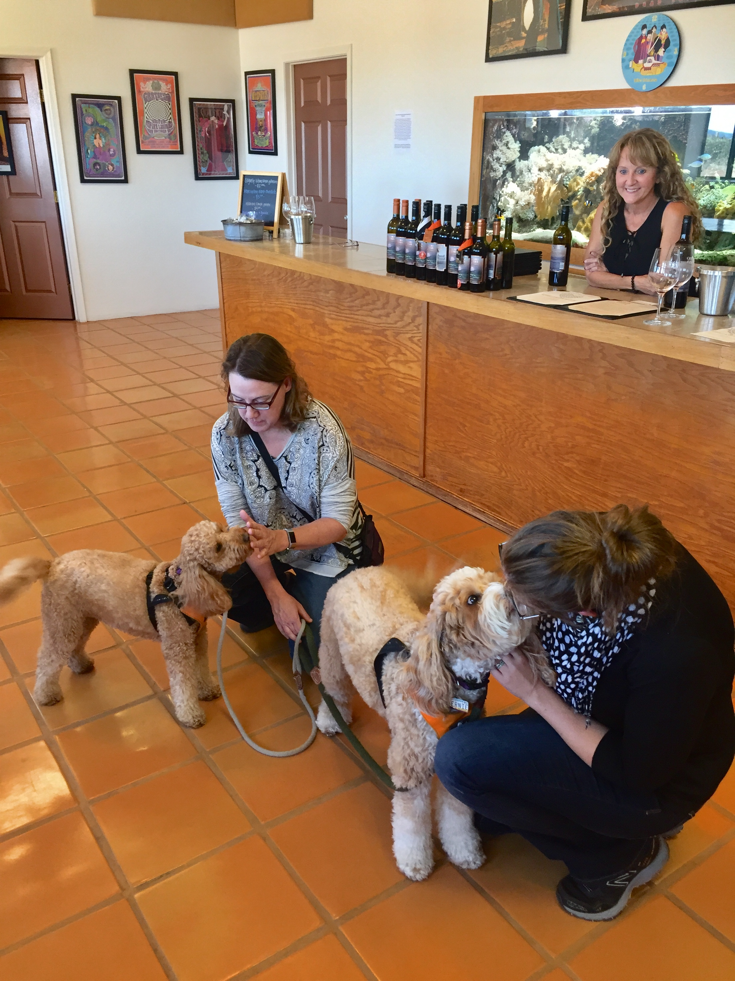 Labradoodles Bernie and Lizzie McSquare visit the most dog-friendly winery in Southern Arizona, Rancho Rossa Vineyards in Elgin. Read more about our pack field trip, the wines, and the dedication of owners Chris & Breanna Hamilton to animal rescue. #McSquareDoodles #dogfriendlytravel #SouthernArizona