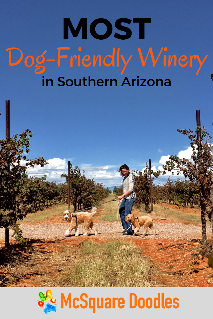 Labradoodles Bernie and Lizzie McSquare visit the most dog-friendly winery in Southern Arizona, Rancho Rossa Vineyards in Elgin. Read more about our pack field trip, the wines, and the dedication of owners Chris & Breanna Hamilton to animal rescue. #McSquareDoodles#dogfriendlytravel #SouthernArizona