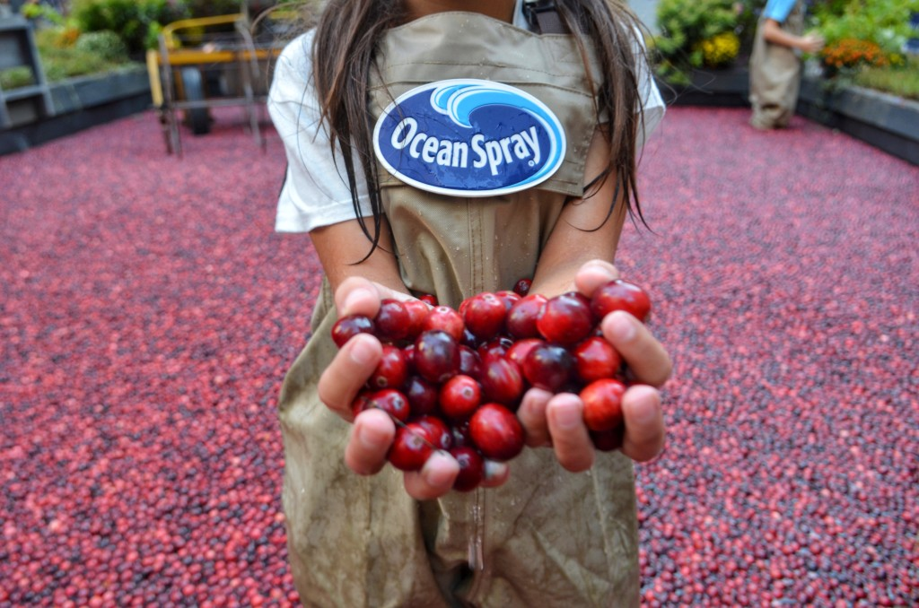 cranberry-bog-Rockefeller-center-OceanSpray-1-1024x678.jpg