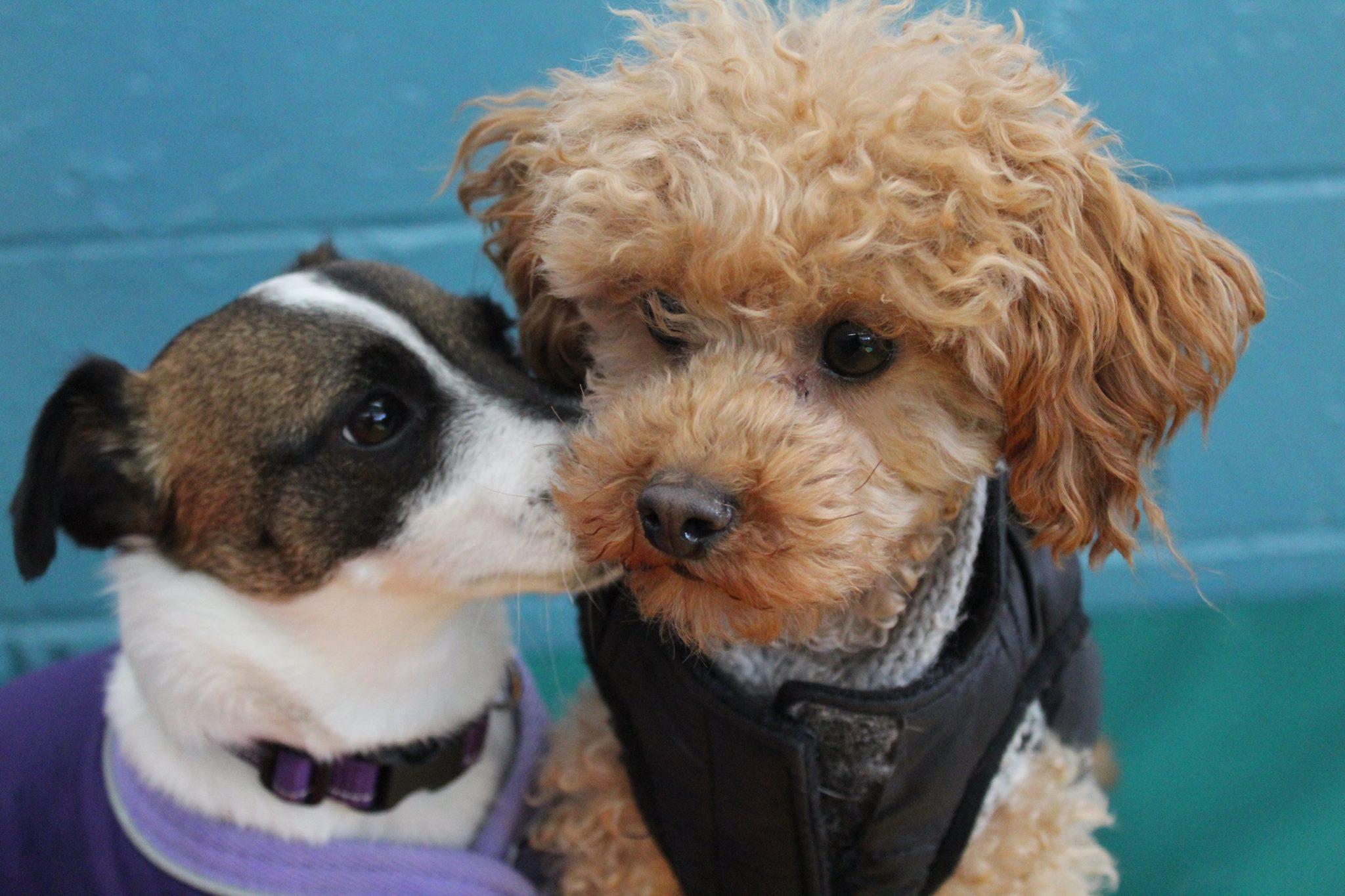 littles kisses.jpg