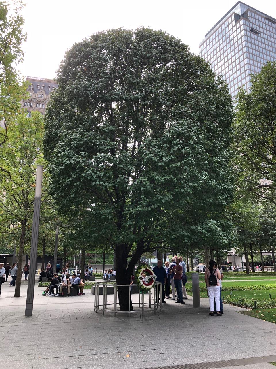 The Survivor Tree - See next image for description.
