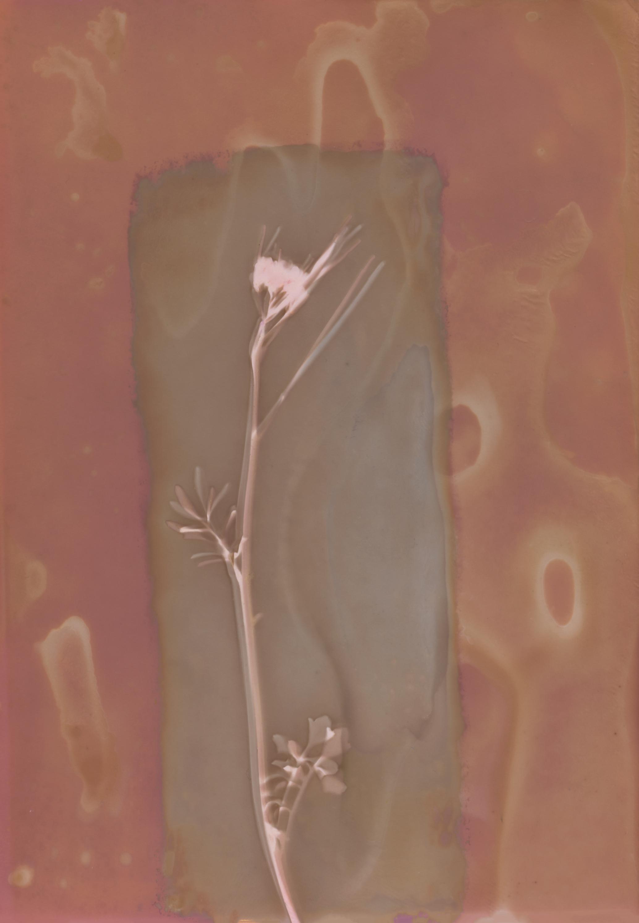 Pink flower lumen spotted.jpg