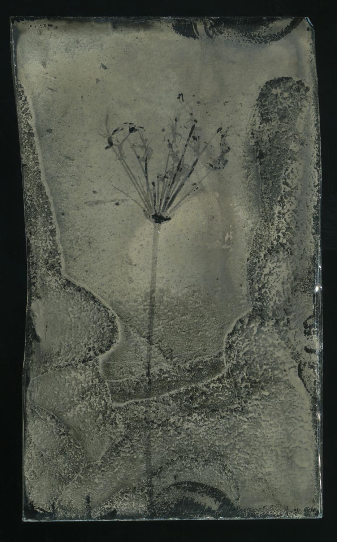 wet plate glass negative.jpg