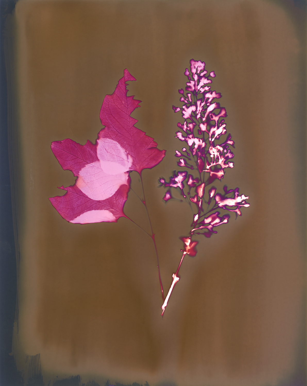 lilacs030.jpg