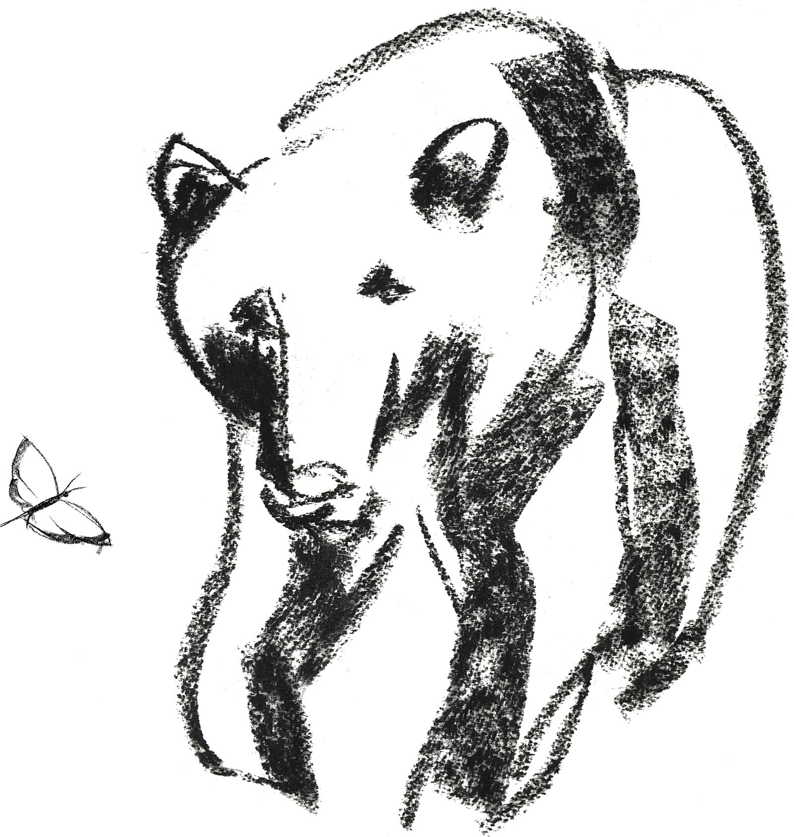 bearWebOPT.png