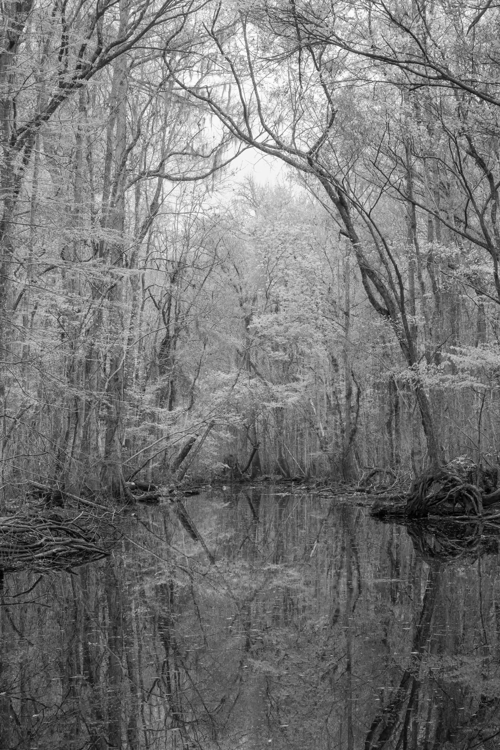 Spring Reflection 1