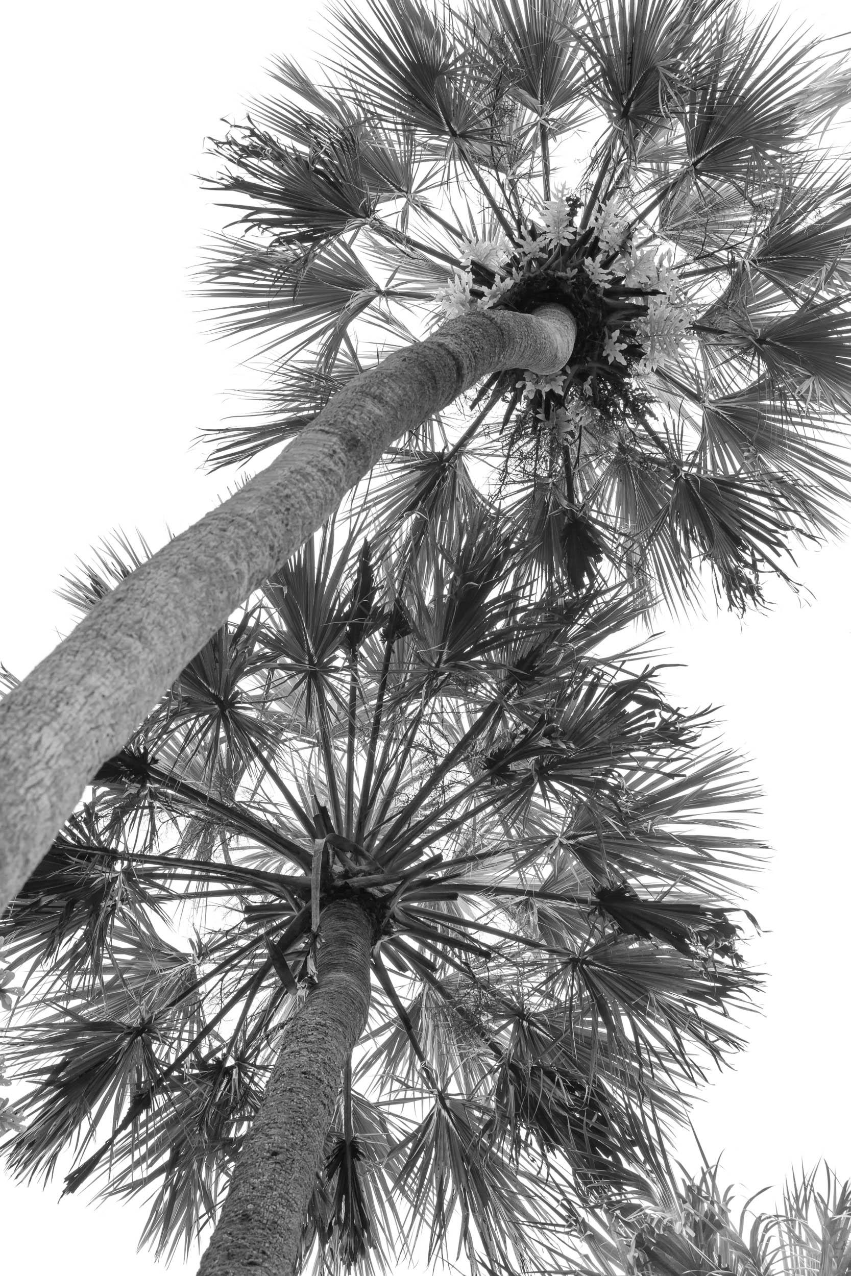 Palm Sprockets