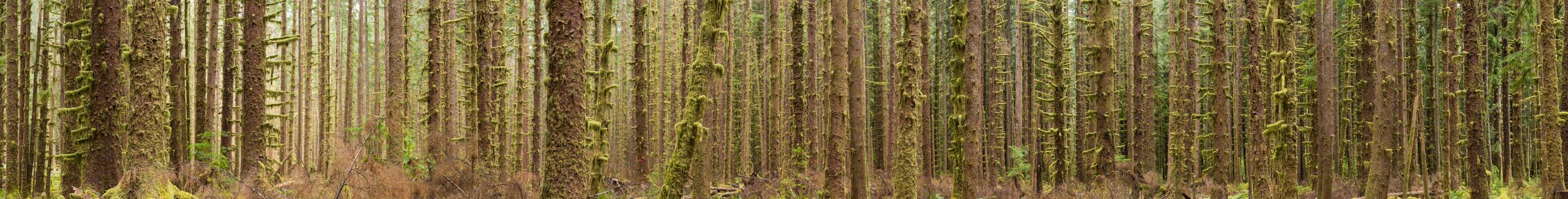 Tactile Wilderness