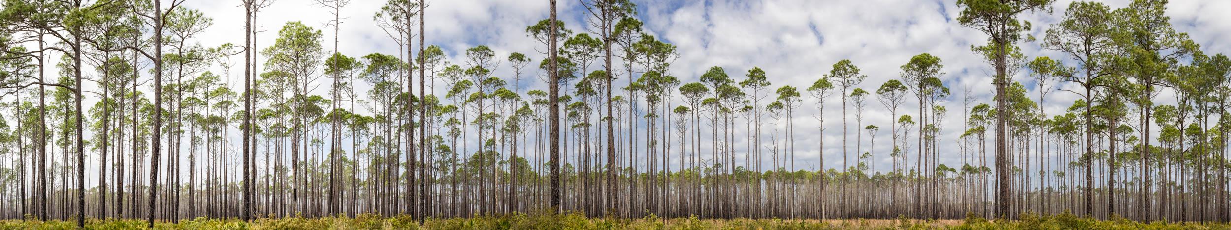 Layered Pines 2