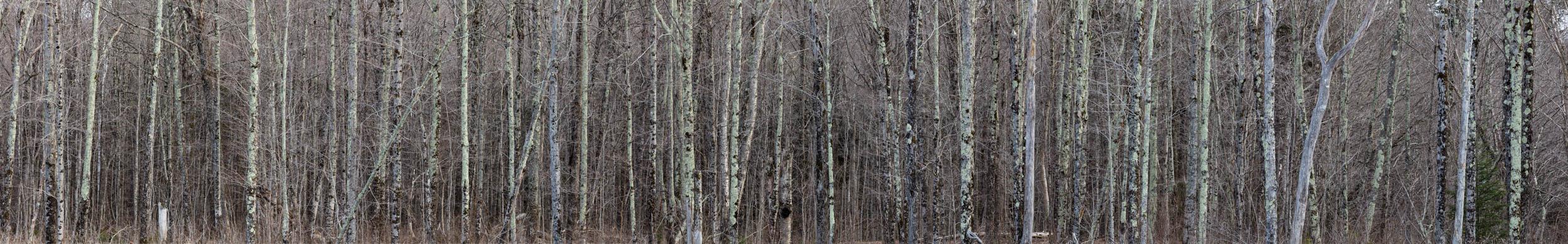 Birch Enclosure