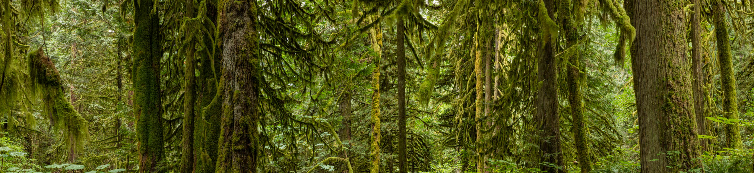 Old Growth Study 907