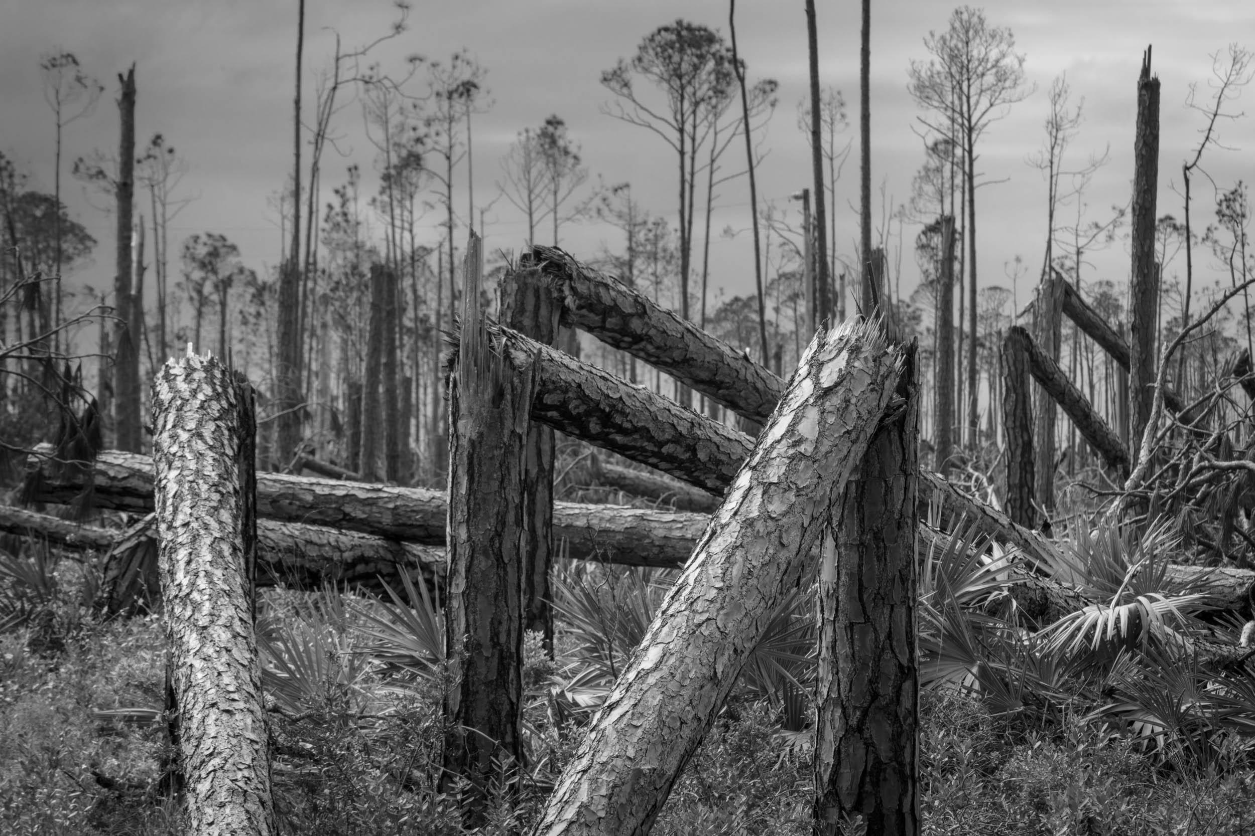 Bent Pines 2