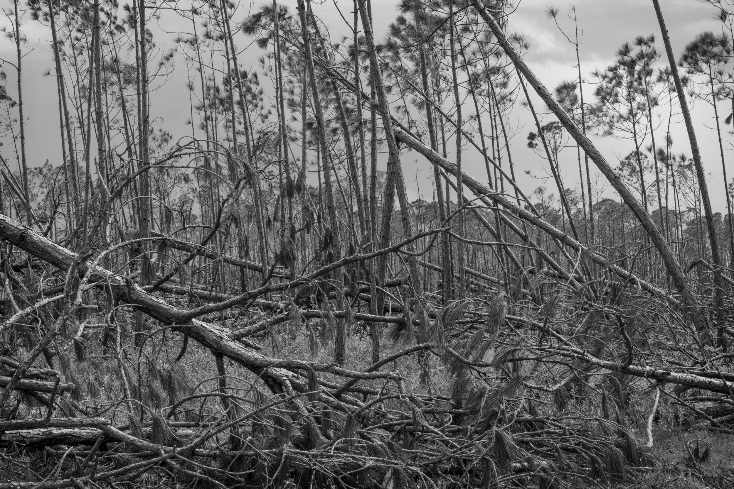 Fallen Branches