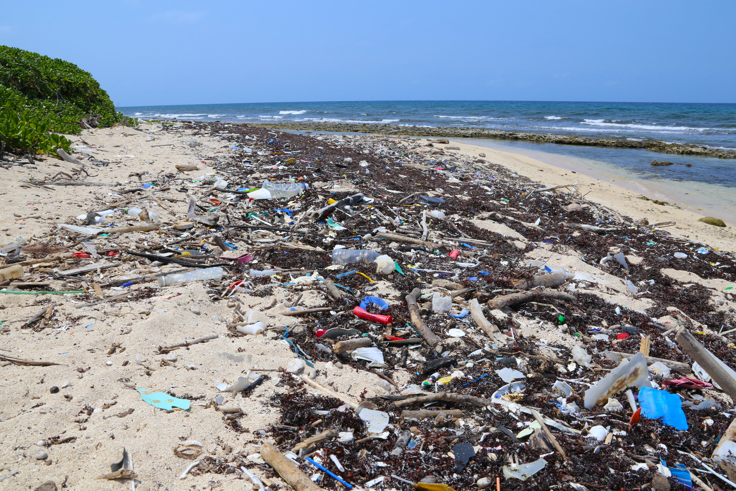 Mixture of trash and decomposing Sargassum at Pumpkin Hill Beach on the island of Utila, Honduras. Image by Kelsie DiPerna. All rights reserved.