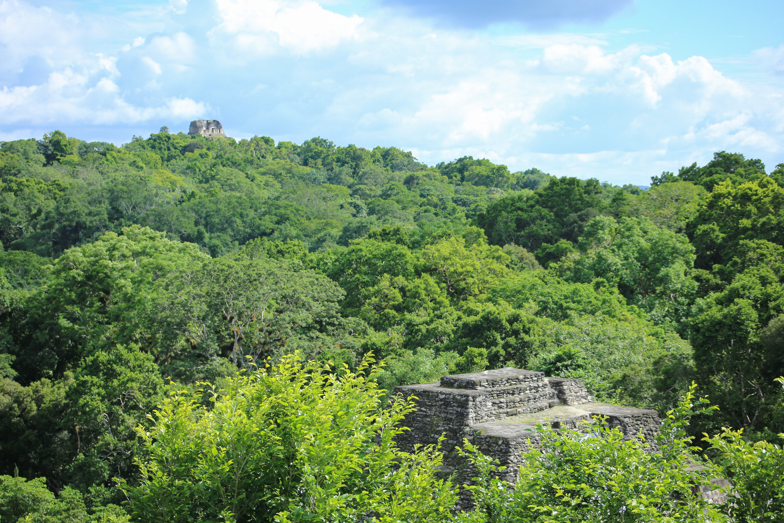 View above the canopy of the North Acropolis.