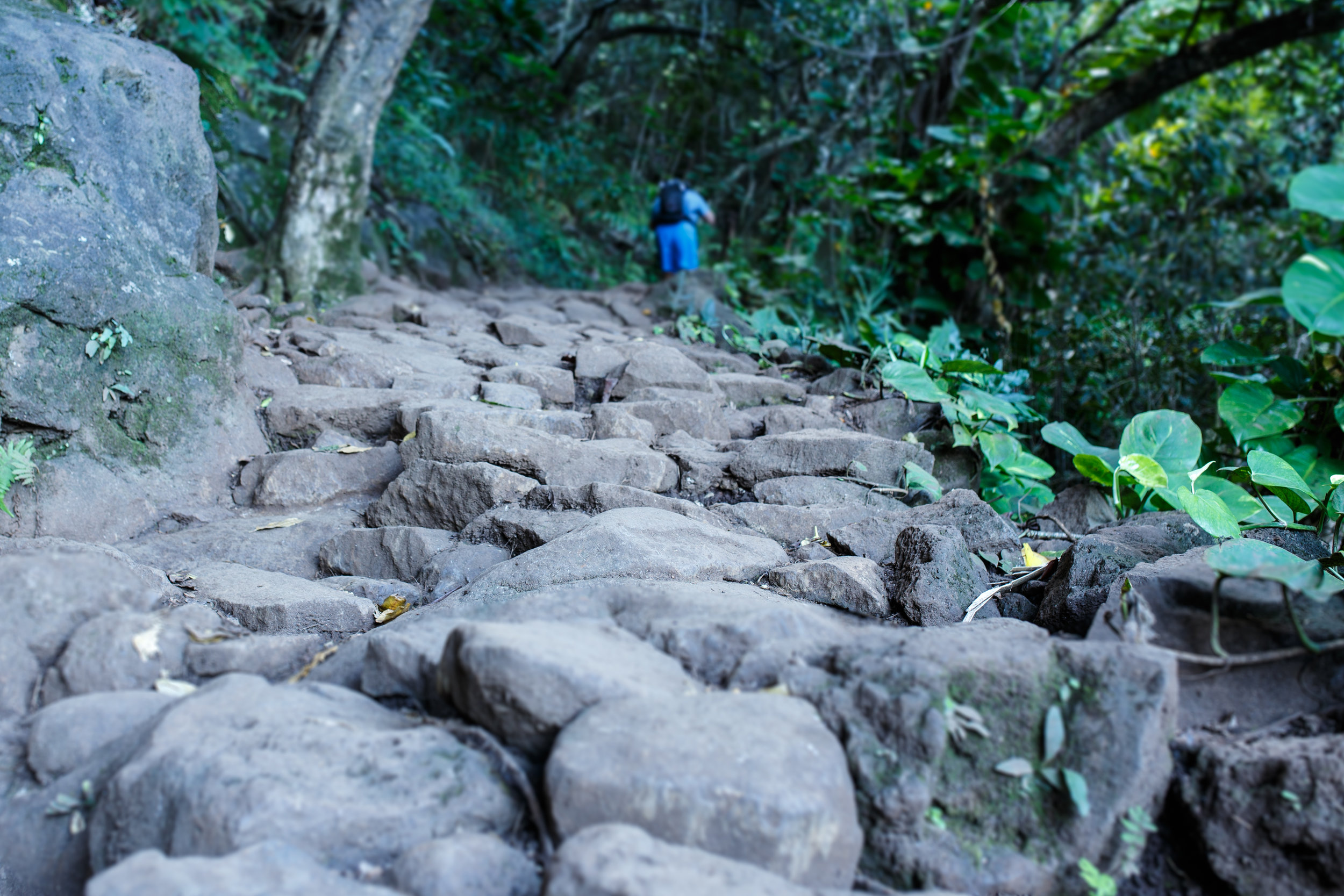 The first half mile of the trail is lined with stones to make hiking in all conditions super simple.