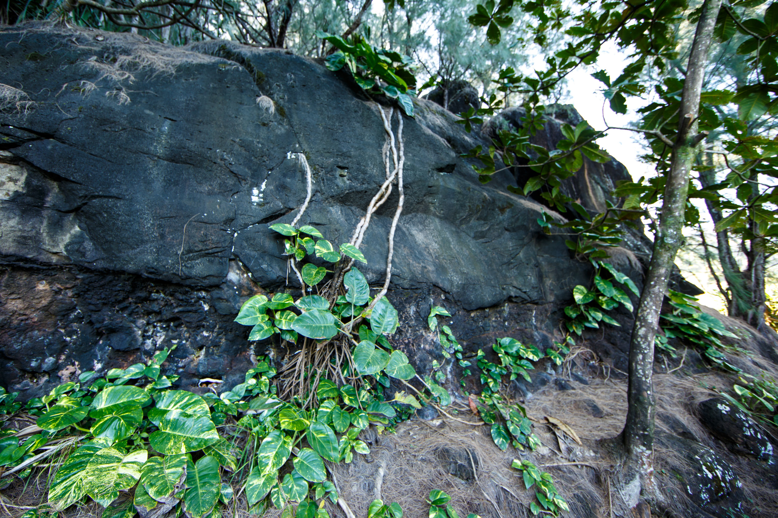 Admiring the plant growth out of the large boulders flanking the trail.
