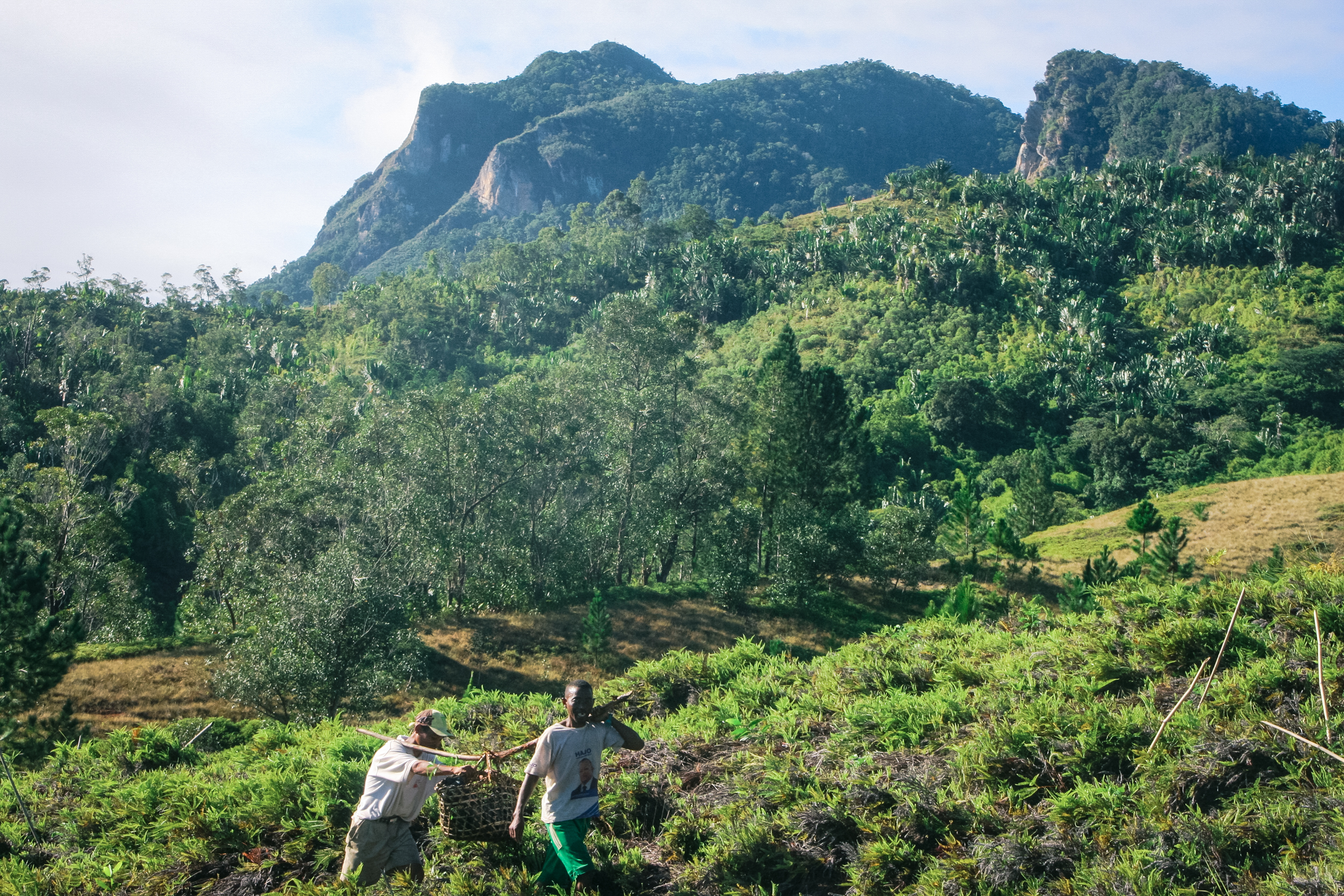 Planting Trees in Madagascar