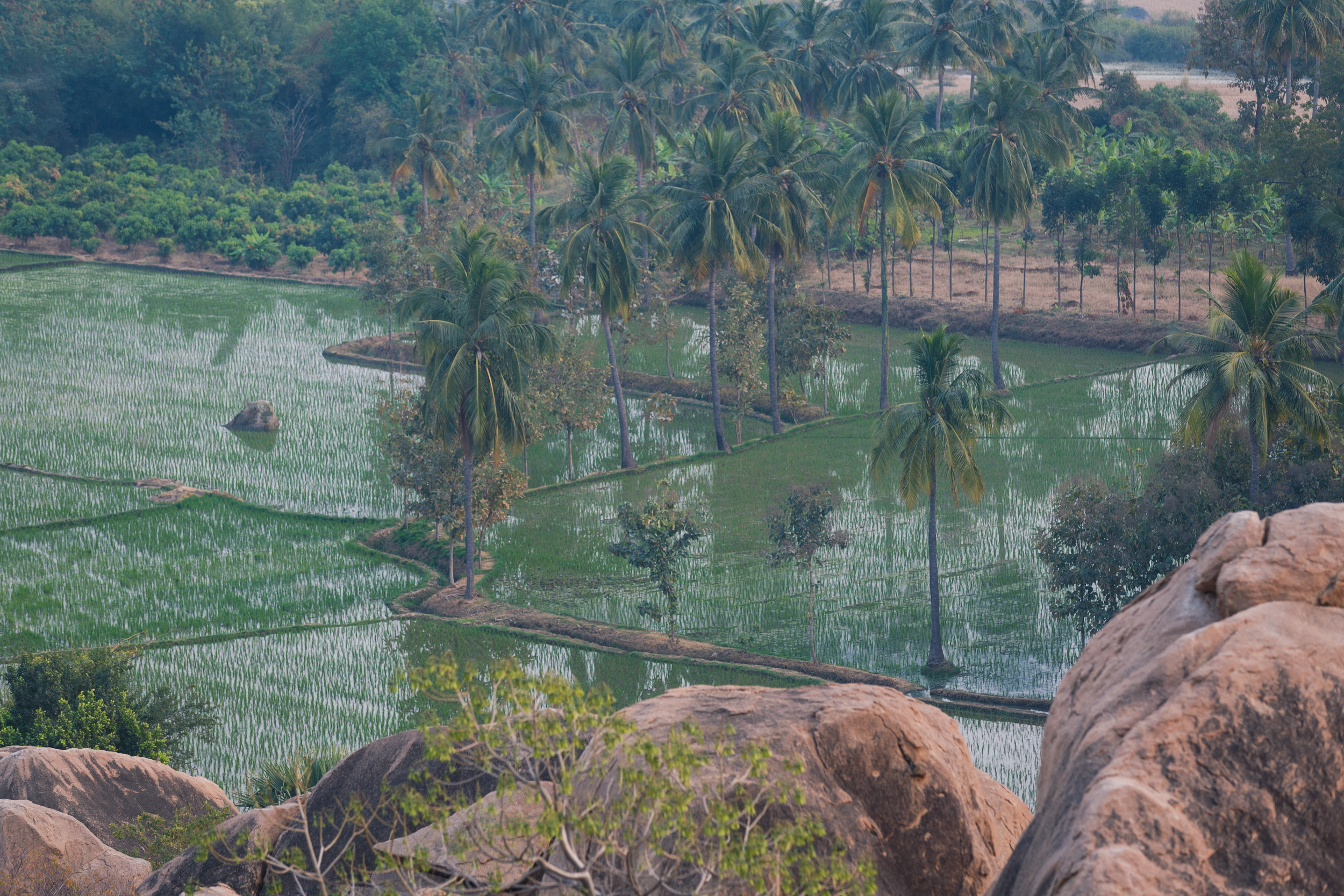 Rice paddies along the river on Hampi Island.