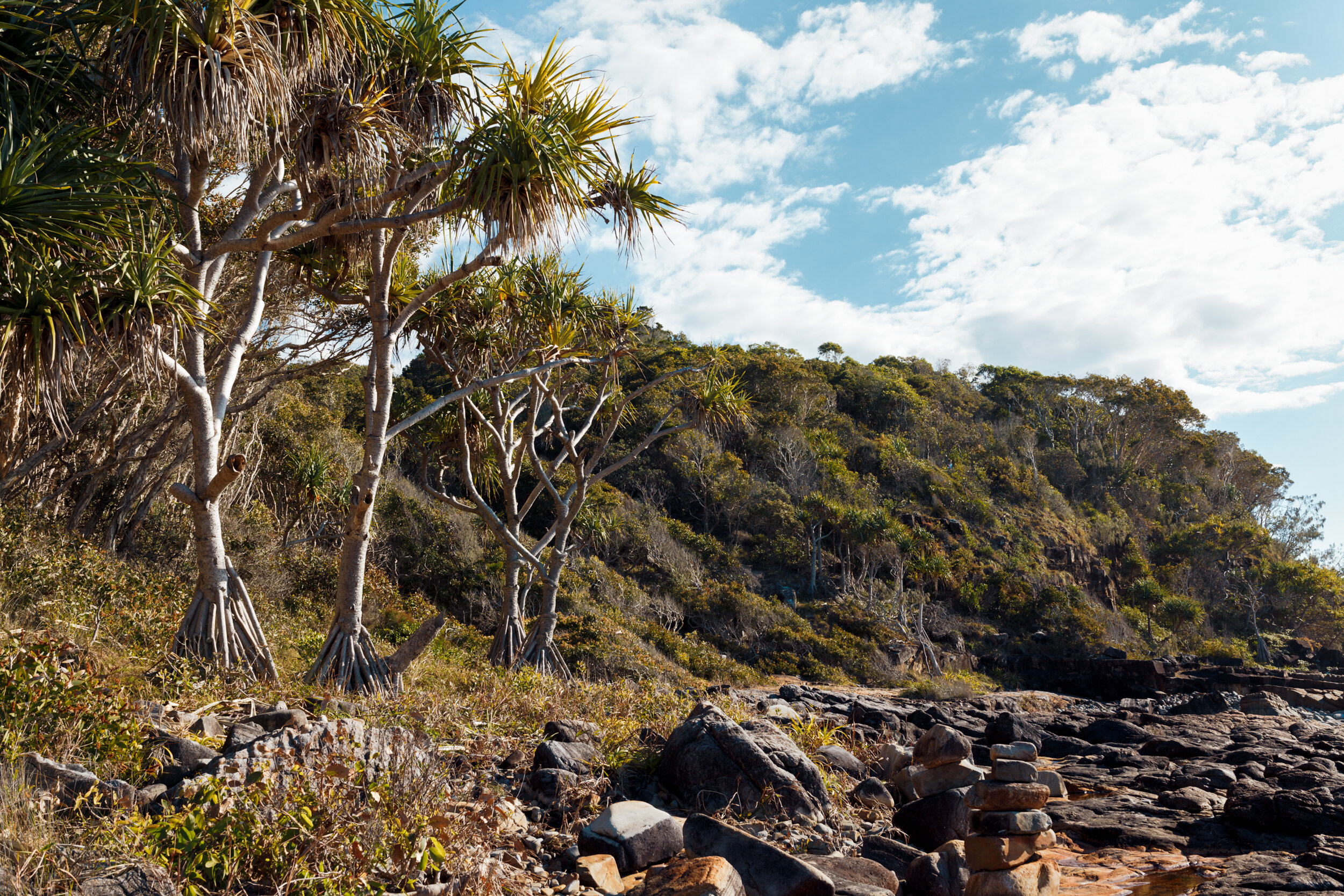 Stunning coastline along the water in Noosa National Park.