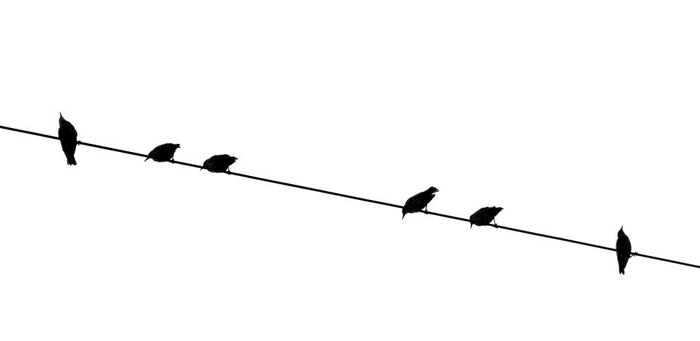 birds-001.jpg
