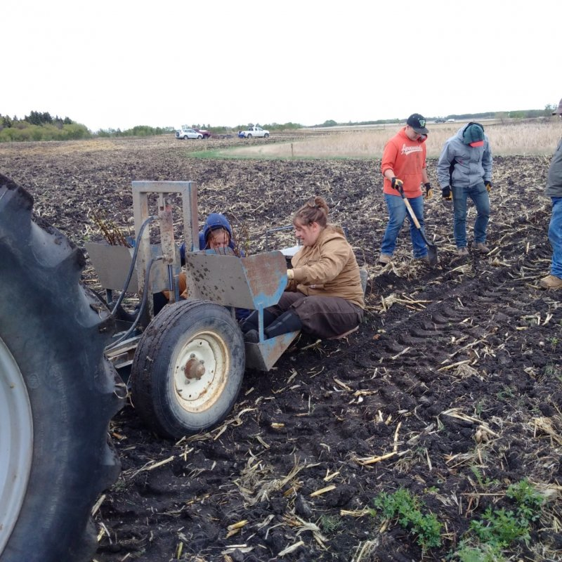 Planting shelterbelts on May 11, 2016