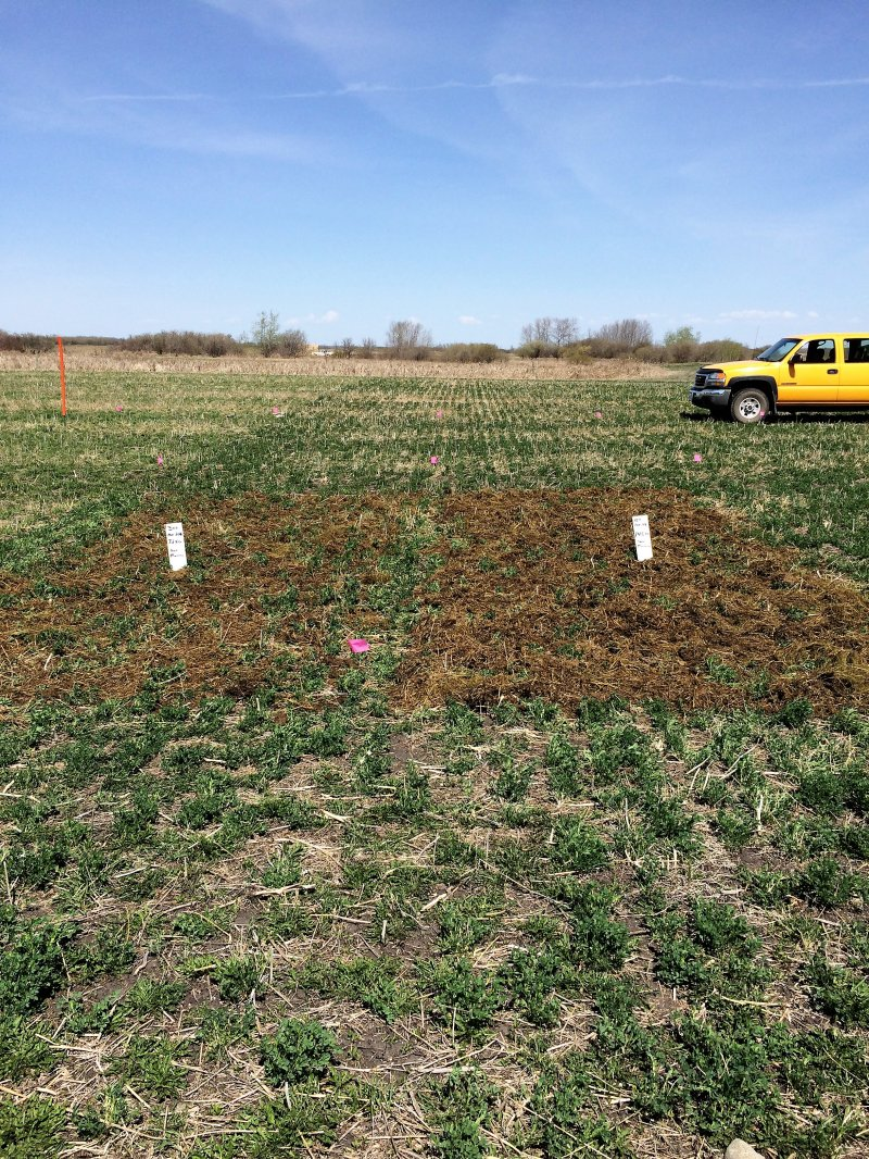 Comparison of 15 and 30 tonnes of manure applied on May 5, 2016