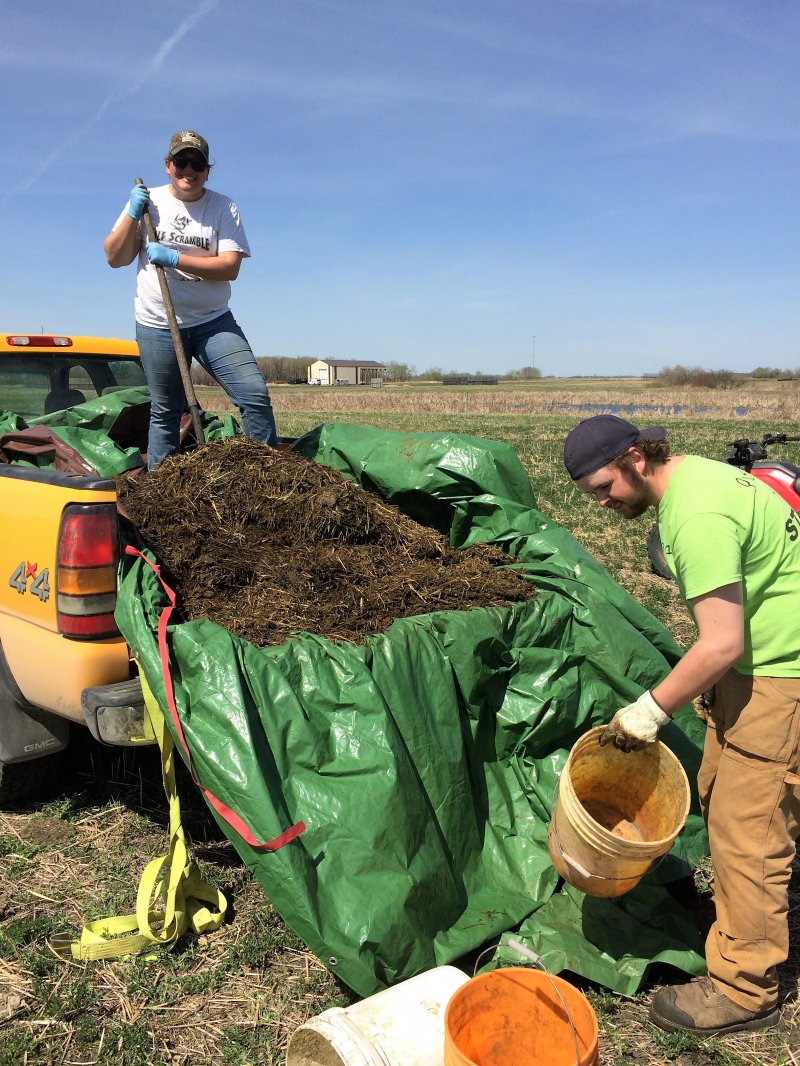 Summer students fertilize alfalfa plots with manure on May 5, 2016