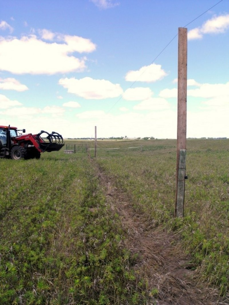 Windbreak boards are used as lift poles to move cattle between pastures for this project.