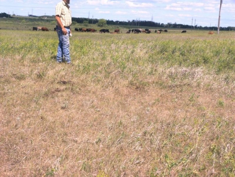 Residue left behind after cattle grazed