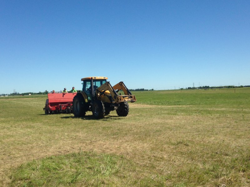Sod seeding into pasture that was grazed for 36 hours (June 2016)