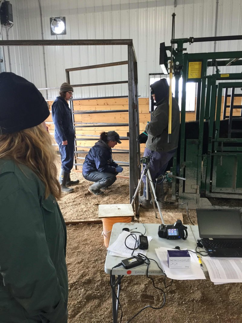 As of spring 2016 -  This project is led by U of M professor Dr. Kim Ominski in collaboration with researchers from NDSU and part of the project will take place at MBFI. The initial stages of the project have already begun at NDSU; 60 cows are being fed two different diets. After the calves of those cows are born they will be vaccinated using two different strategies: needle-syringe and needle-free.  When the calves are ready to be backgrounded (fall 2016), they will be brought to the Johnson site where their intake on pasture will be recorded. The cattle will then move on to their next location for finishing and slaughter data collection.  Photo Gallery  Select any image below to view enlargement and/or play slideshow:        Our Sponsors:                         Copyright (c)  Manitoba Beef & Forage Initiatives Inc.  Site Handcrafted by  F3 Designs  (January 2016) / Maintained via  F3 CMS      At this Johnson Research Field, MBFI is researching cow-calf nutrition and needle-free vaccination. The project lead is Dr. Kin Ominski of the University of Manitoba
