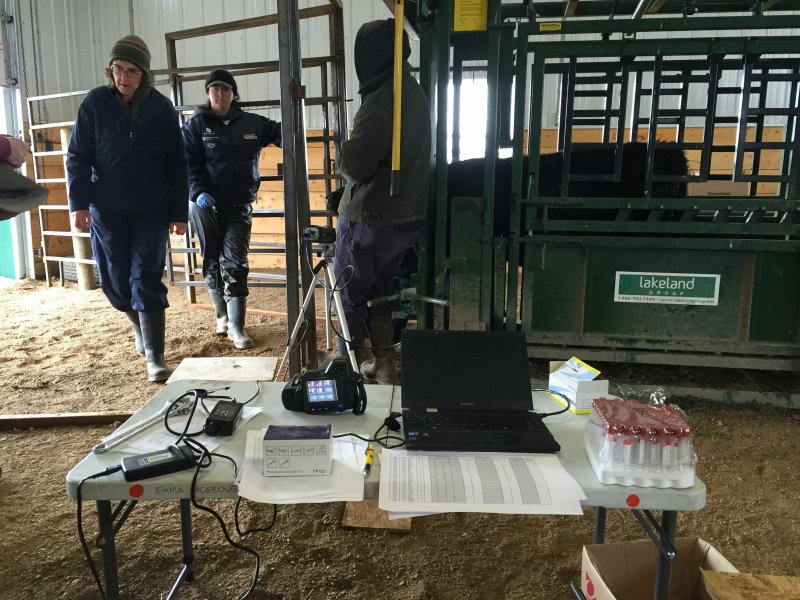 Project lead, Dr. Kim Ominski (at left) was hard at work Oct. 6 at the Johnson Research Farm