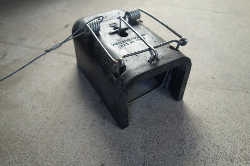 A set Black Hole trap used during the 2015 and 2016 trapping seasons