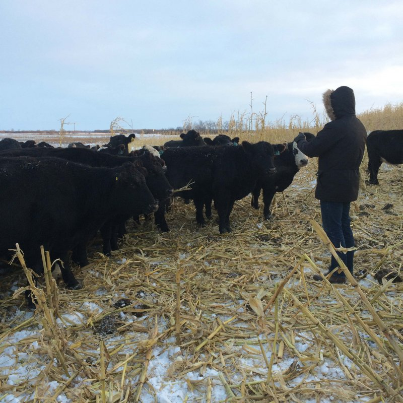 MBFI Winter Grazing Tour Dec 8 2016-Glenn F with the cattle.jpg