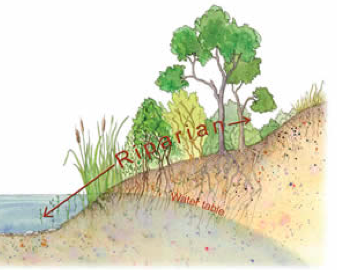Diagram showing riparian zone between water and upland1