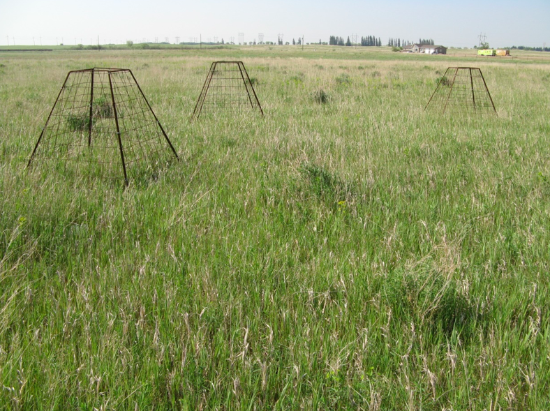 Grazing exclusion cages were set up in early June 2015 in the dry site in Field I at First Street Pasture; photo by Mae Elsinger.